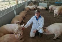 Ean Pollard and his pigs.