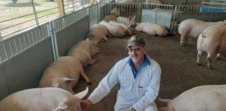 Ean Pollard and his pigs.